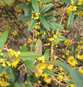 Early Spring Flowersinsecticide Risk For Bees Ecoipm