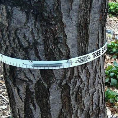 Tree band